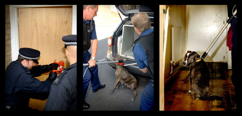 'Dangerous Dogs' Raids