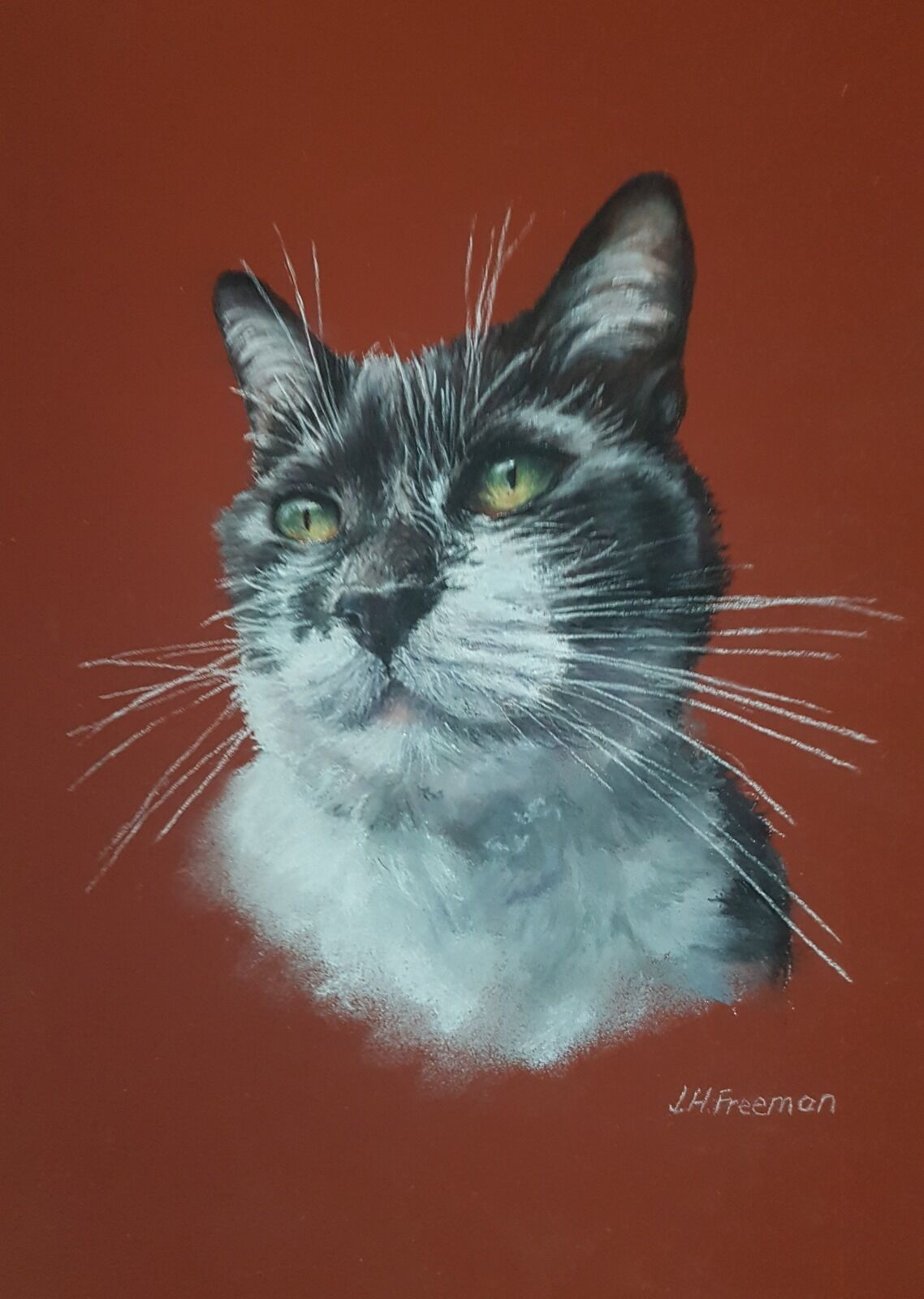 Black and white cat in pastel