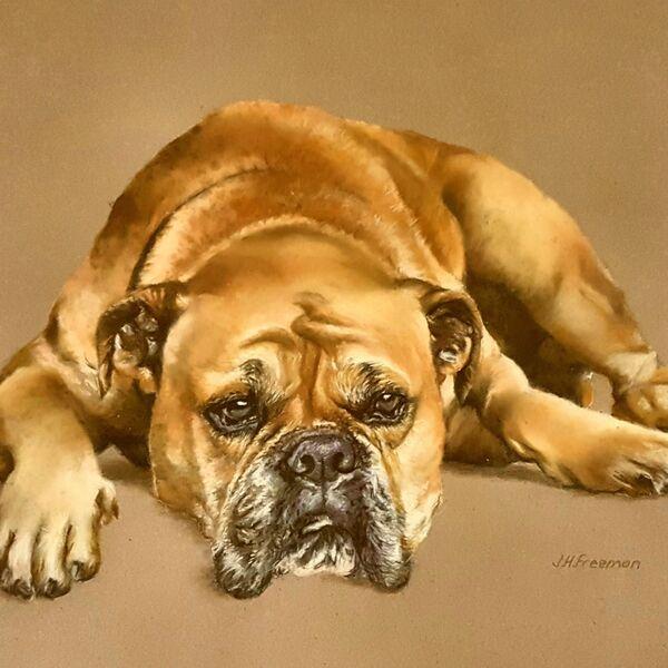 Boxer in pastel