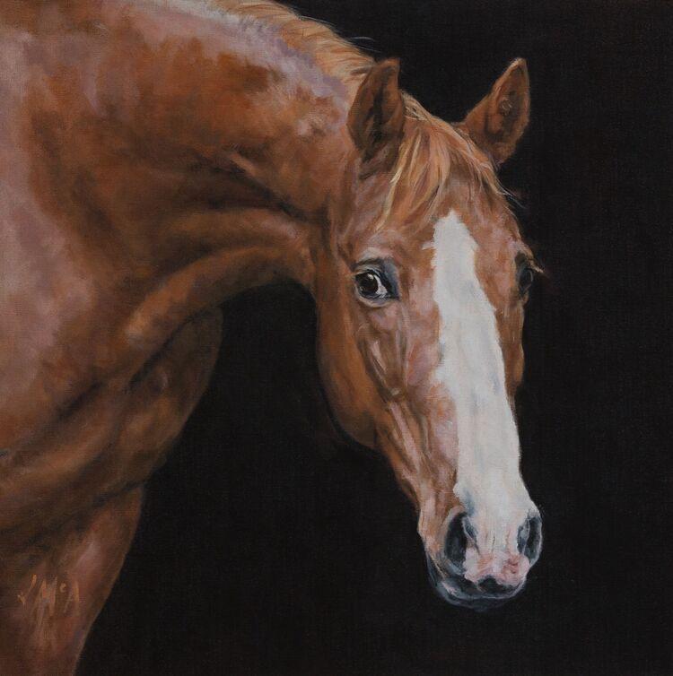 Chesnut horse white blaze portrait oil painting jacqueline mcateer