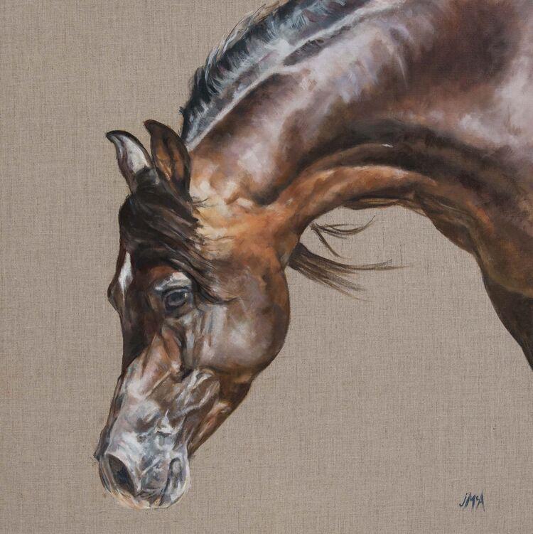 Horse, equestrian, Arab horse, Arab, oil portrait, Jacqueline McAteer