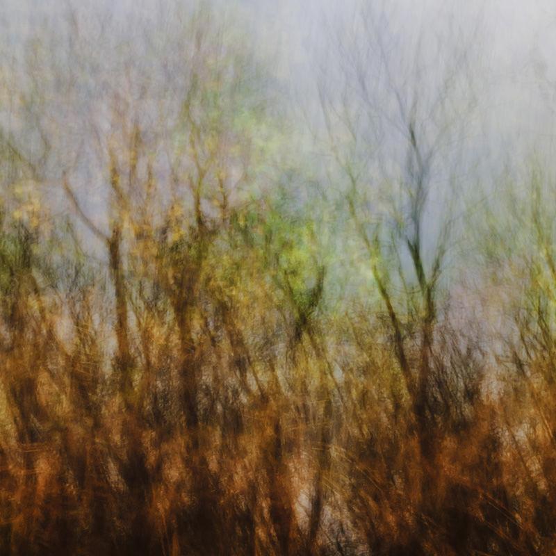 Autumn Impressions II