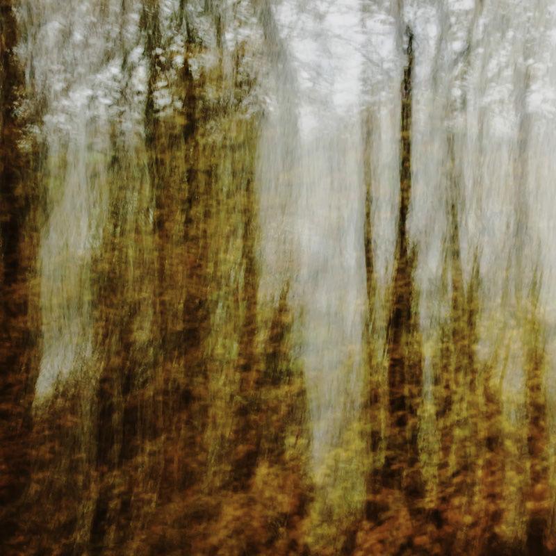 Autumn Impressions IV