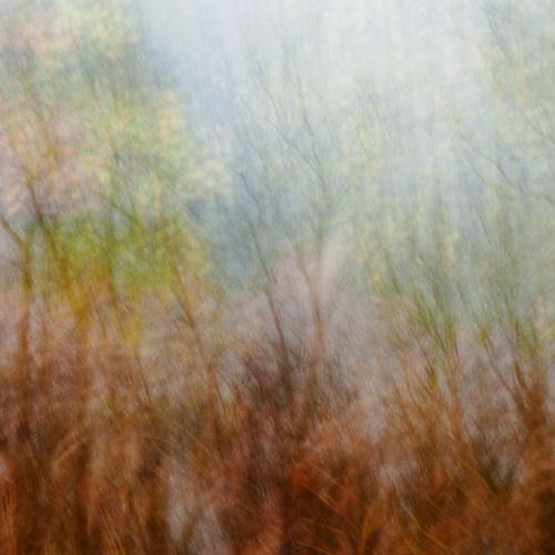 Autumn Impressions I