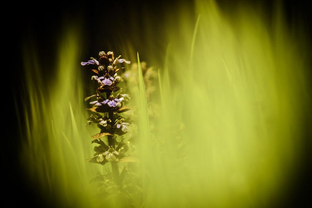 Lying in the Grass III