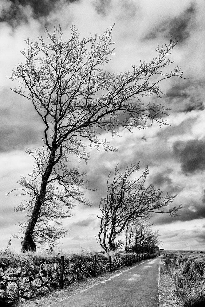 Dartmoor Road I