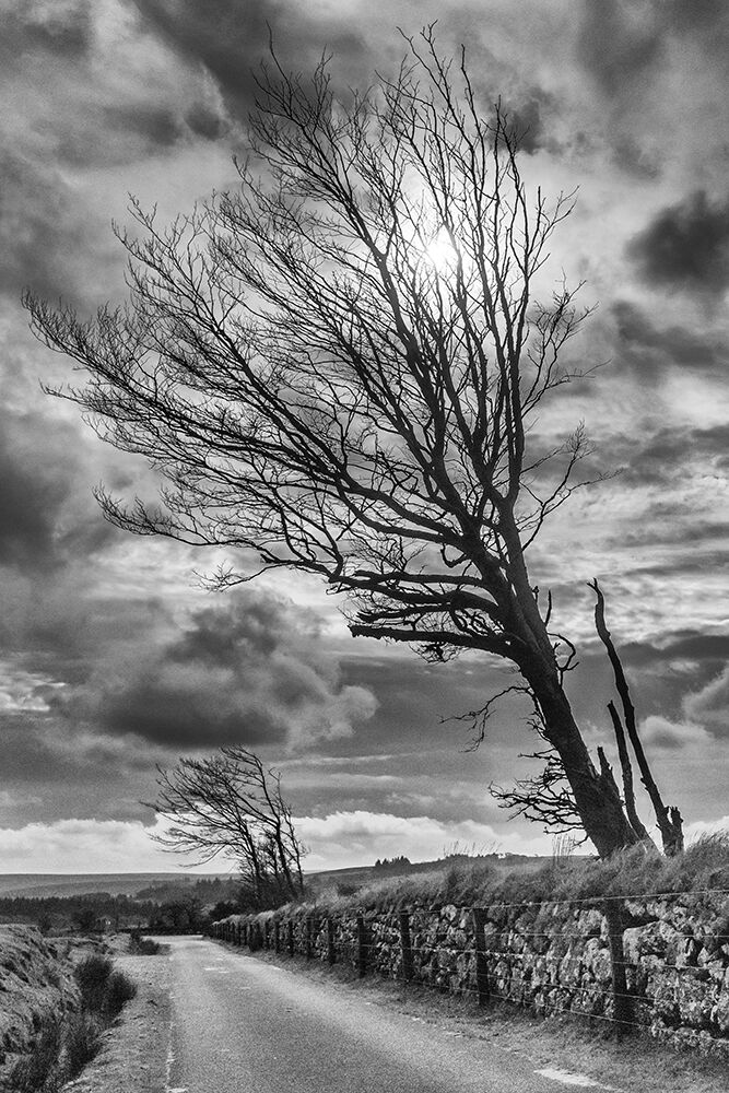 Dartmoor Road II