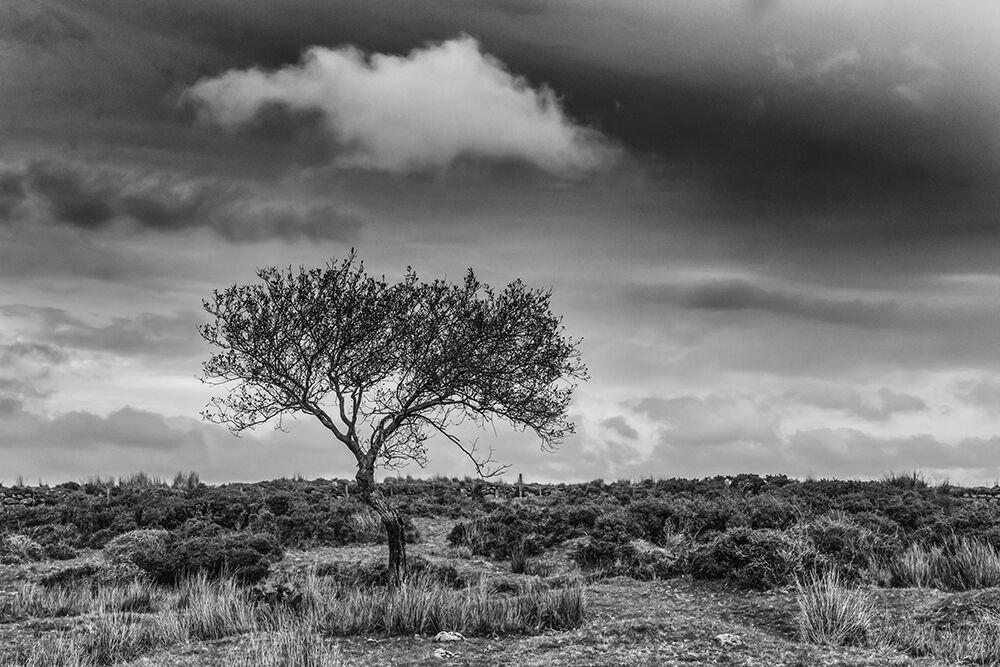 Dartmoor Trees 2
