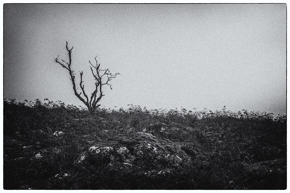 Dartmoor Trees 6