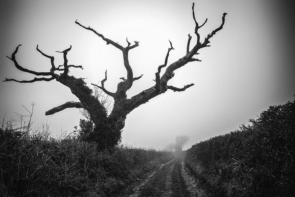 Dead Tree II