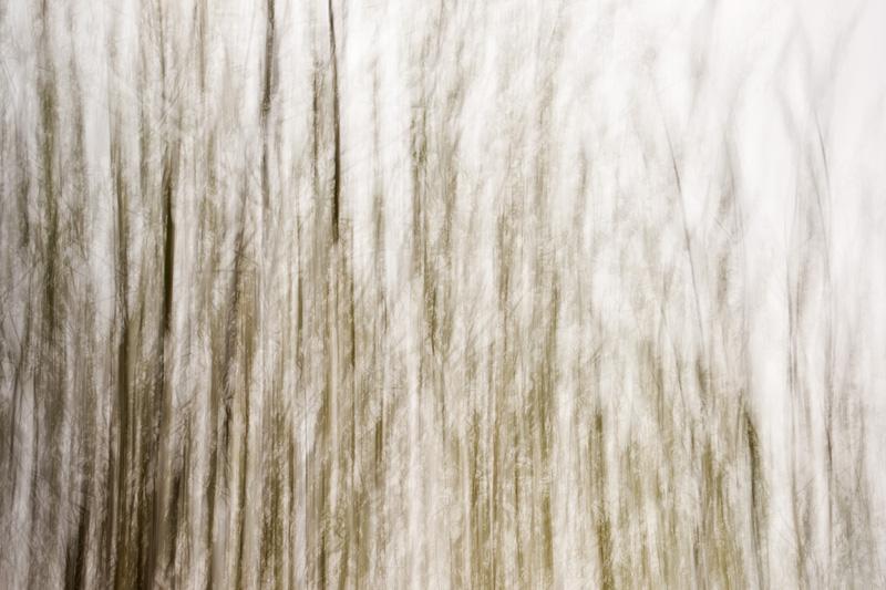 Hedgerow Abstract III