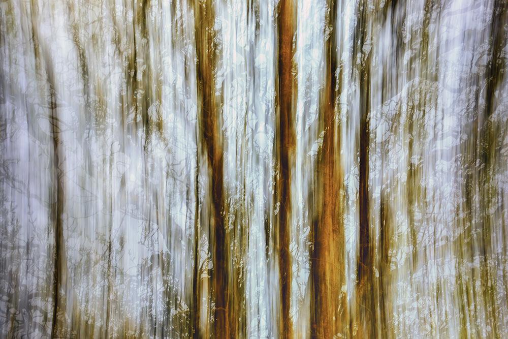 Hedgerow Abstract II
