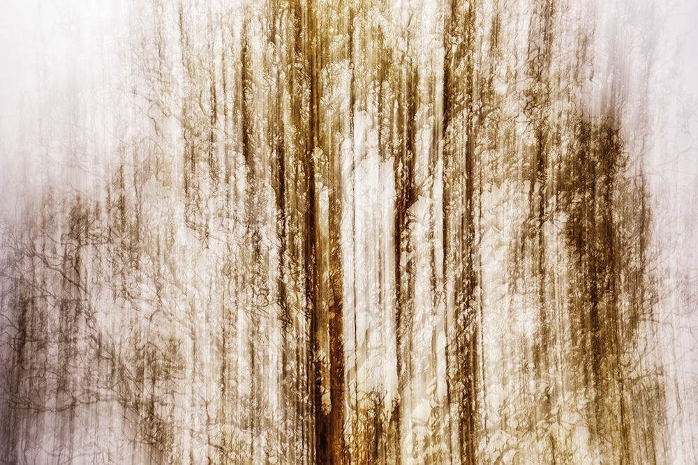 Hedgerow Abstract I