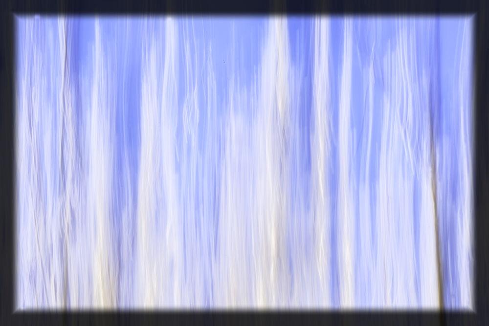 Hedgerow Abstract VI