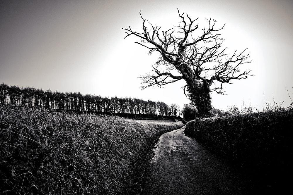 Lane and Tree