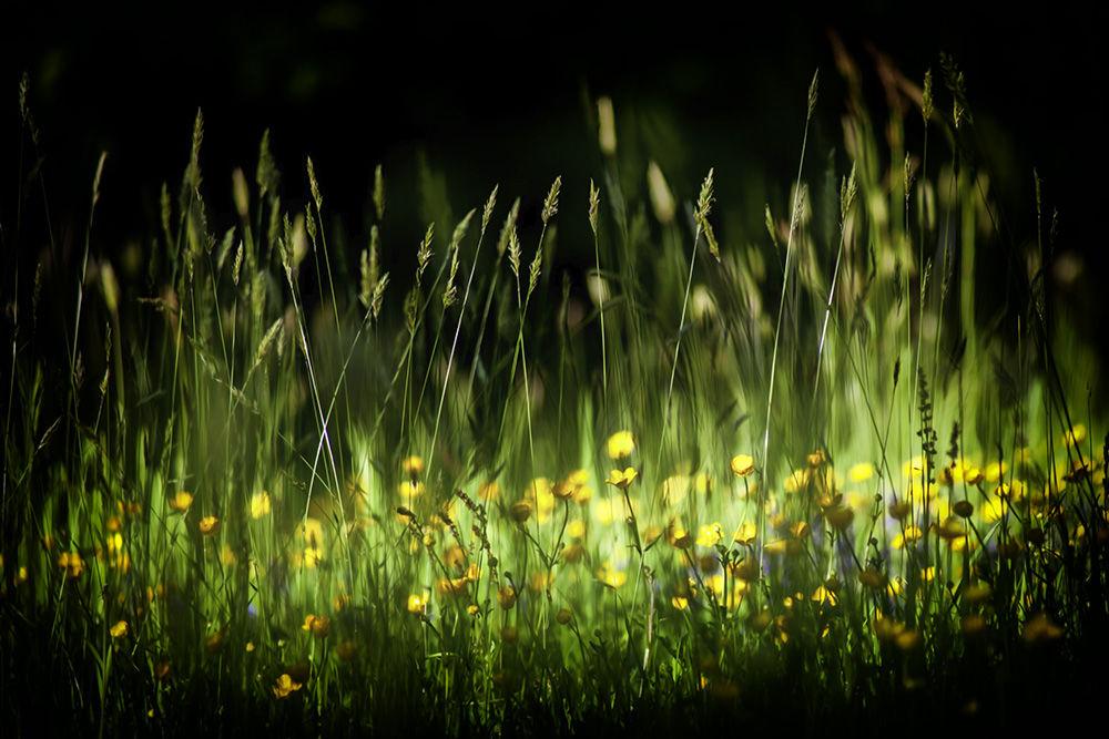 Lying in the Grass II