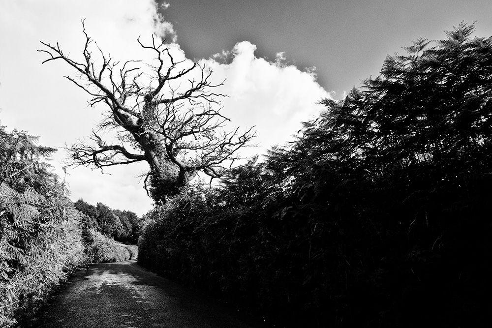 Oak and Lane, Devon
