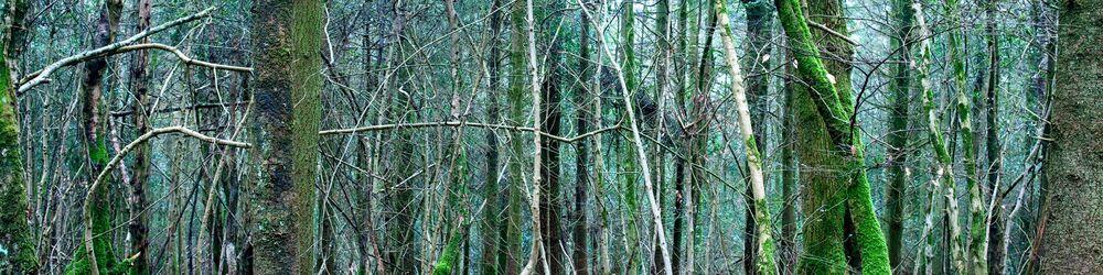 Tree Sonata 11