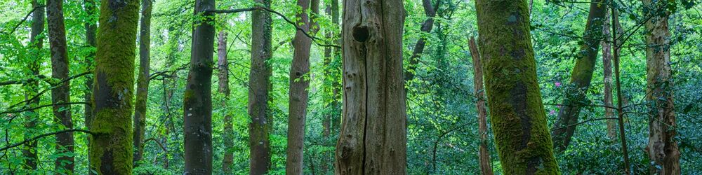 Tree Sonata 12