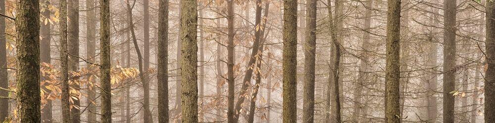 Tree Sonata 1