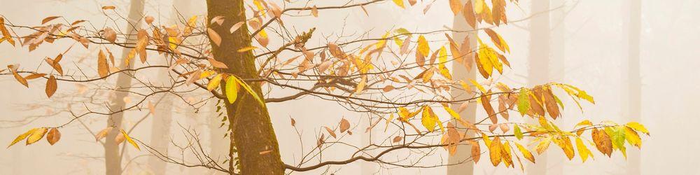 Tree Sonata 2