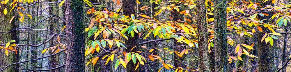 Tree Sonata 3