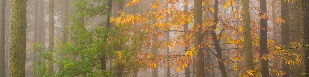 Tree Sonata 5