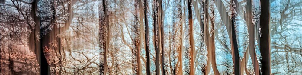 Tree Sonata 6