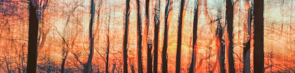 Tree Sonata 7