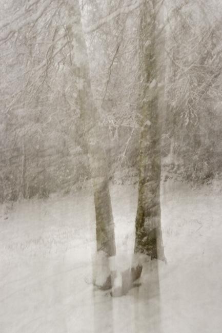 Trees in Snow III
