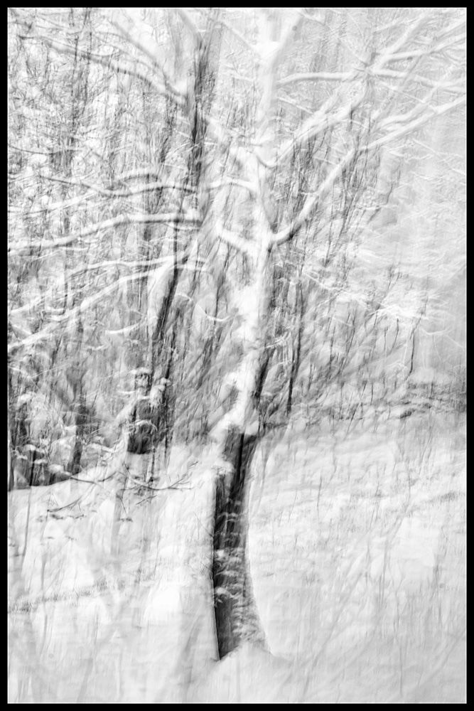 Trees in Snow II
