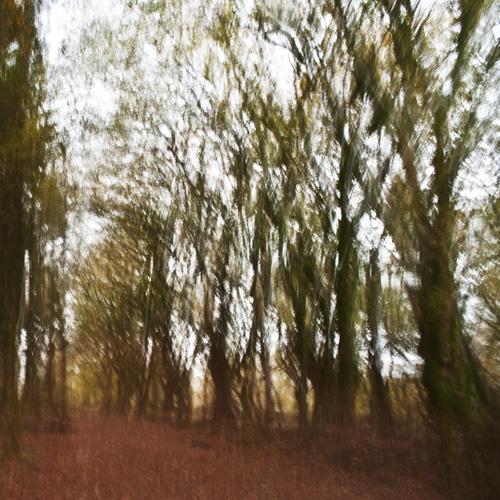 A Walk In the Woods II
