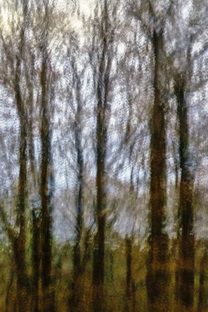 A Walk in the Woods III