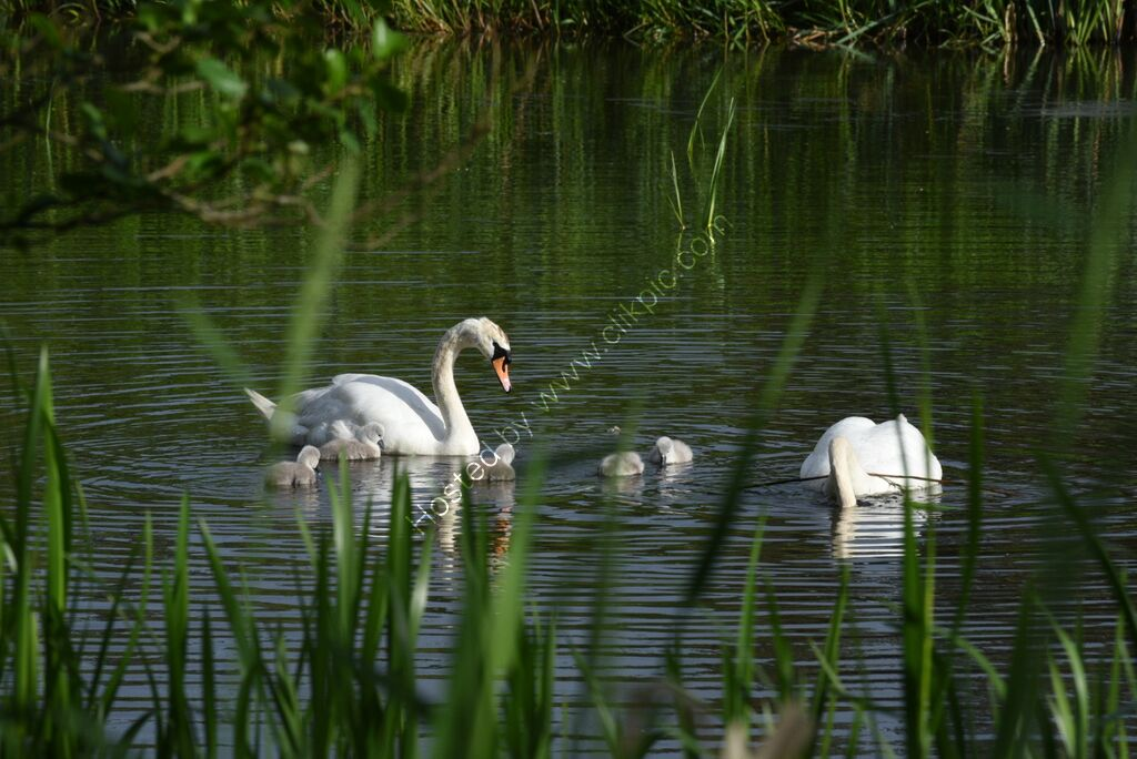 Second Family of five young