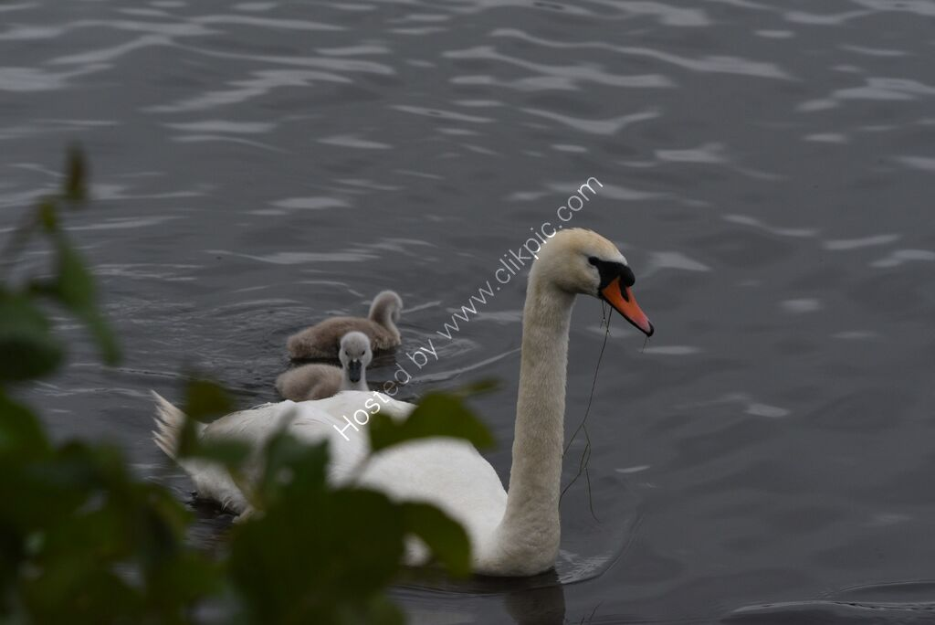 Mother and 3 young