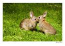 Rabbit-Love