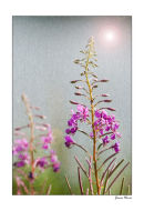 Wild flowers by sunlight