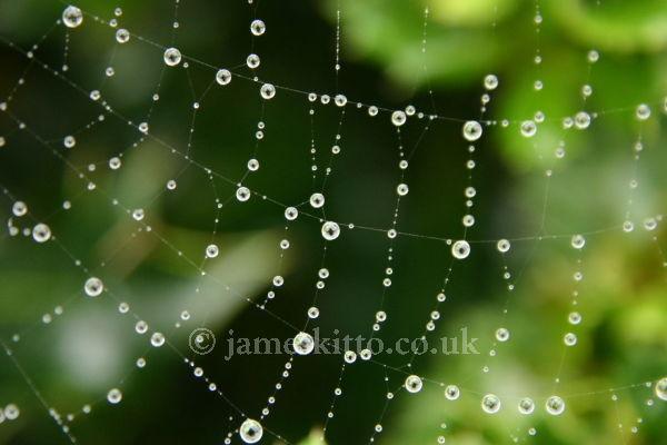 Cobweb Raindrops