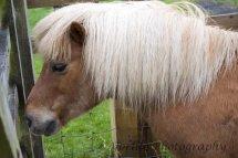 Murton Park Horse