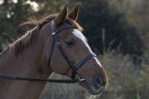2 Thoroughbred Horse