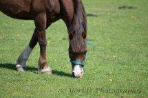 401-Horse