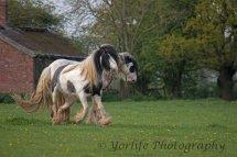 414-Horses