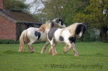 415-Horses