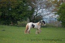 416-Horse