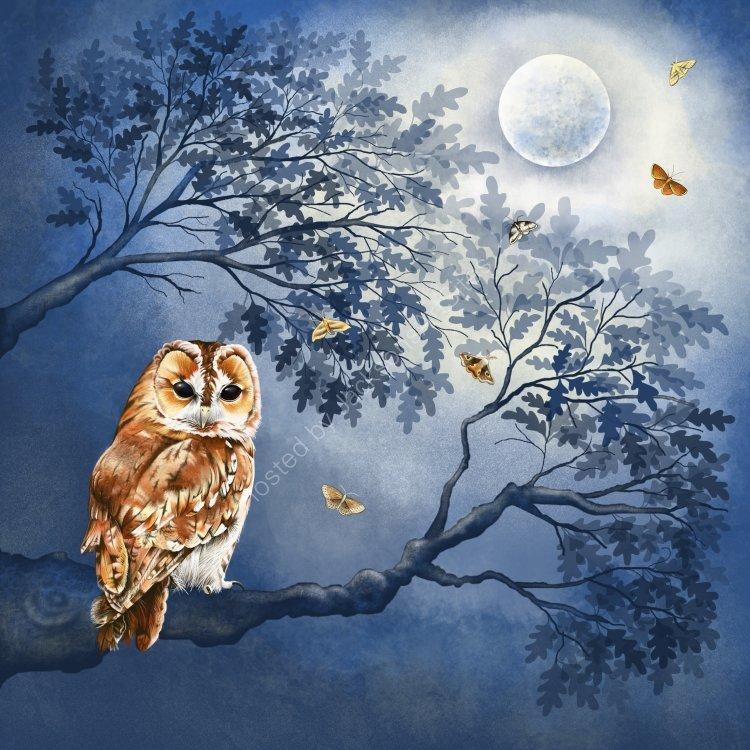 The Moonlight Owl