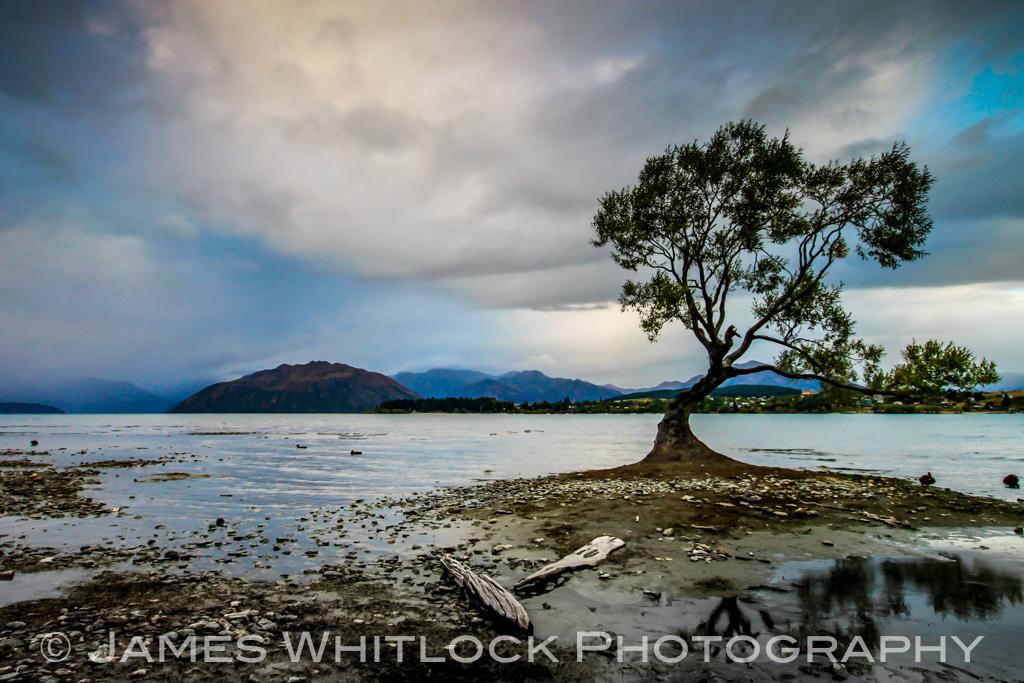 Lonely Tree of Wanaka
