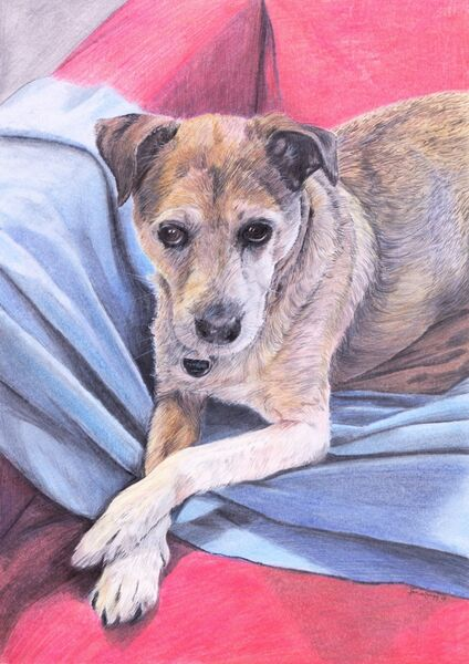 Dog pet portait, coloured pencils, A4 size