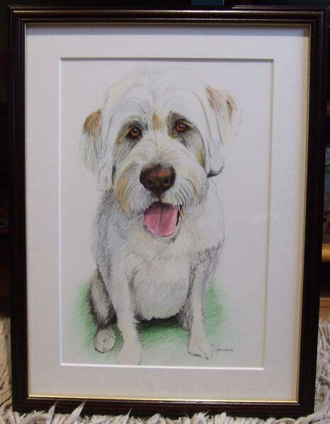 Dog pet portait, coloured pencils, A4 size, framed