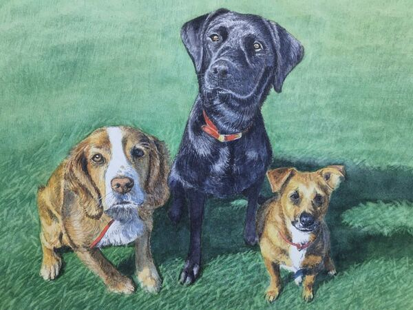 Dog portaits, watercolours, 16in x 12 in