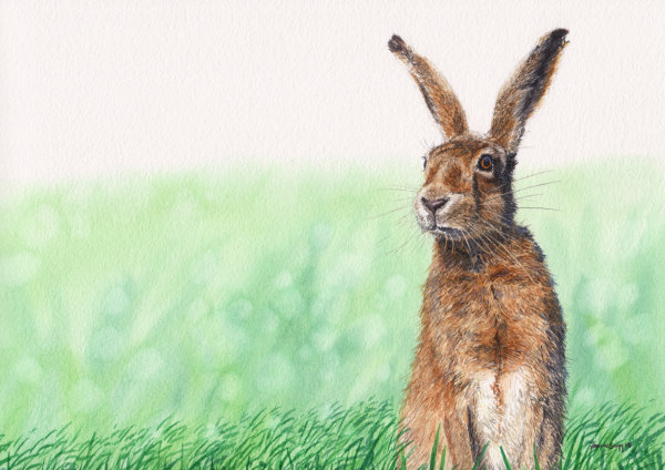 Hare, watercolours on paper, A4 SOLD